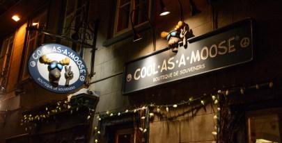 quebec-city-night-moose