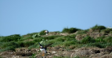 puffins-and-root-cellars-12-of-32