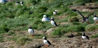 puffins-and-root-cellars-15-of-32
