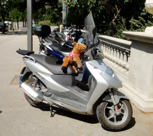 Teddy Bear snuck a ride on a Vespa - Barcelona, Spain