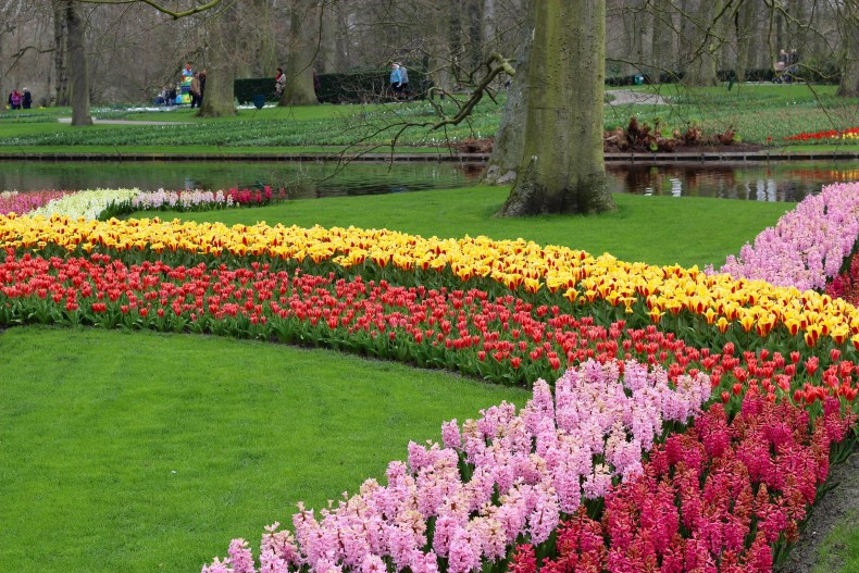 A Guide to Visting the Keukenhof - The Traveling Storygirl
