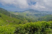 The tea garden and Nilgiri Hills