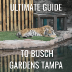 The Ultimate Guide to Busch Gardens Tampa Bay