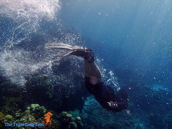 diving in moalboal