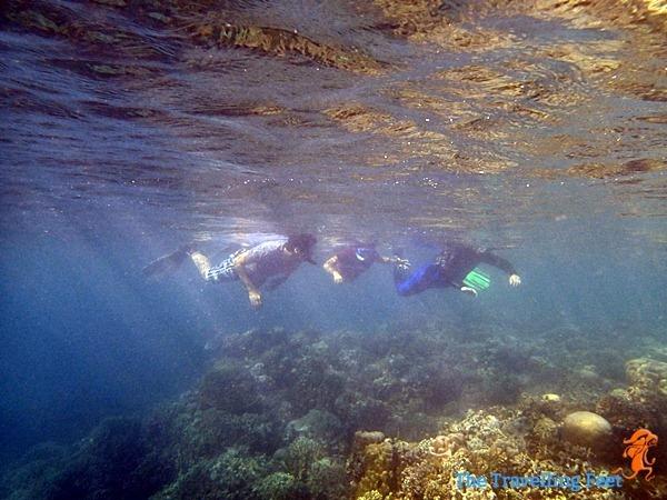 snorkelling at moalboal cebu
