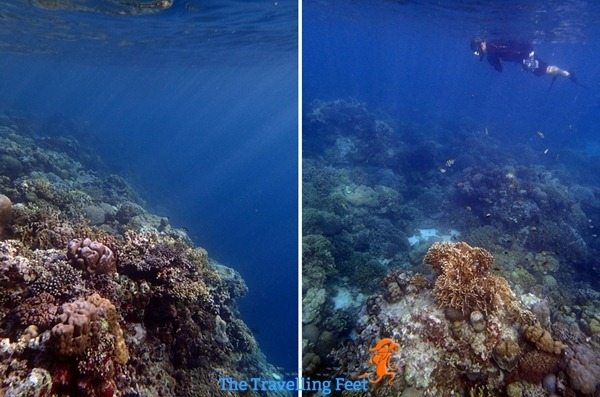 snorkelling in moalboal cebu