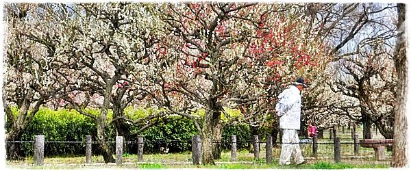Japan: Admiring The Plum Garden In Osaka