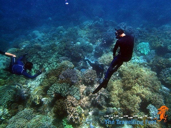 paparazzi divers photographing a sea turtle