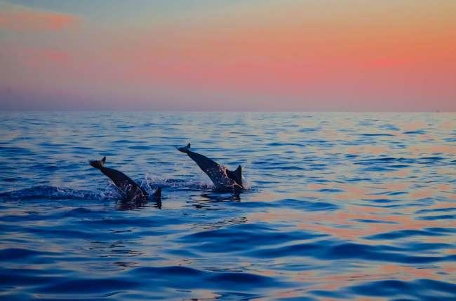 Bali Golden Tour - sunrise dolphin watching at Lovina beach in Northern Bali, Indonesia
