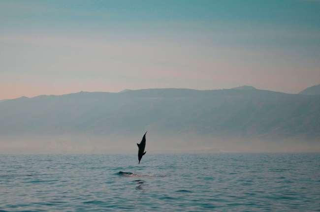 Bali Golden Tour - sunrise jumping dolphin at Lovina beach in Northern Bali, Indonesia