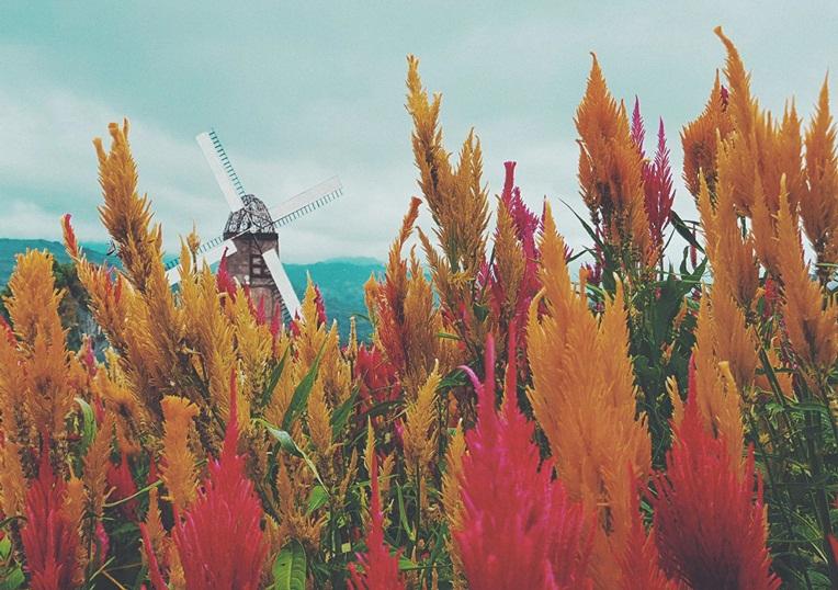 Exploring Cebu's Little Amsterdam: A Sirao Flower Garden Travel Guide