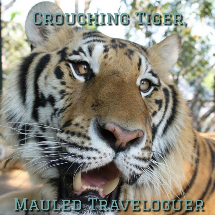 tiger chiang mai tiger kingdome