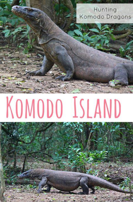 Hunting Komodo Dragons on Komodo Island - the traveloguer travel blog