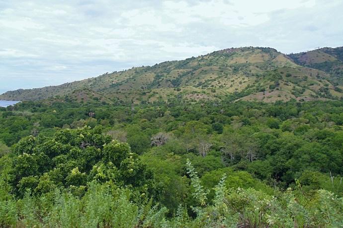 komodo safari hike on komodo island the traveloguer travel blog