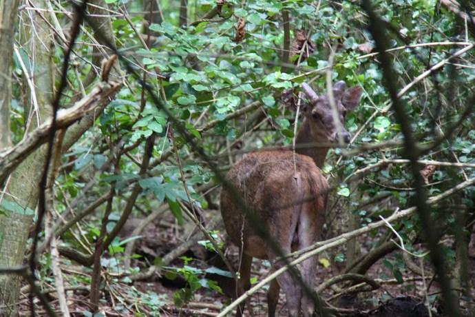 spotting-deer-on-komodo-island-the-traveloguer-travel-blog