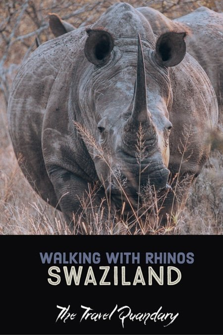 Pin to Pinterest   A Walk With Rhinos In Swaziland