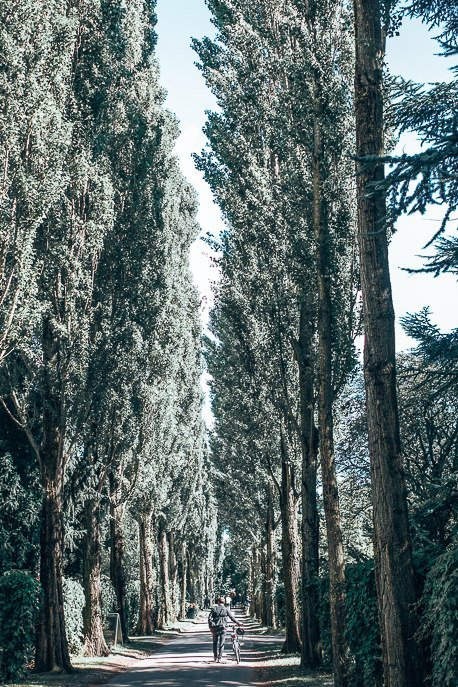 Wheeling a bicycle down tree lined path in Assistens Cemetery - Copenhagen City Guide, Denmark