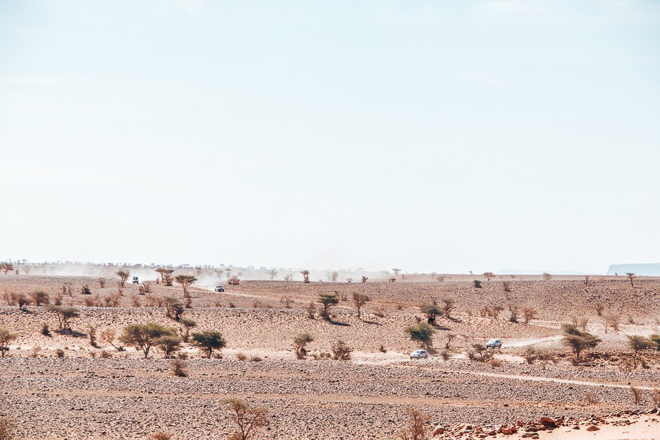 Trees and stones in the Sahara Desert, Morocco