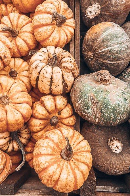 Fresh squash and pumpkin at Brockley Market, London Market Guide