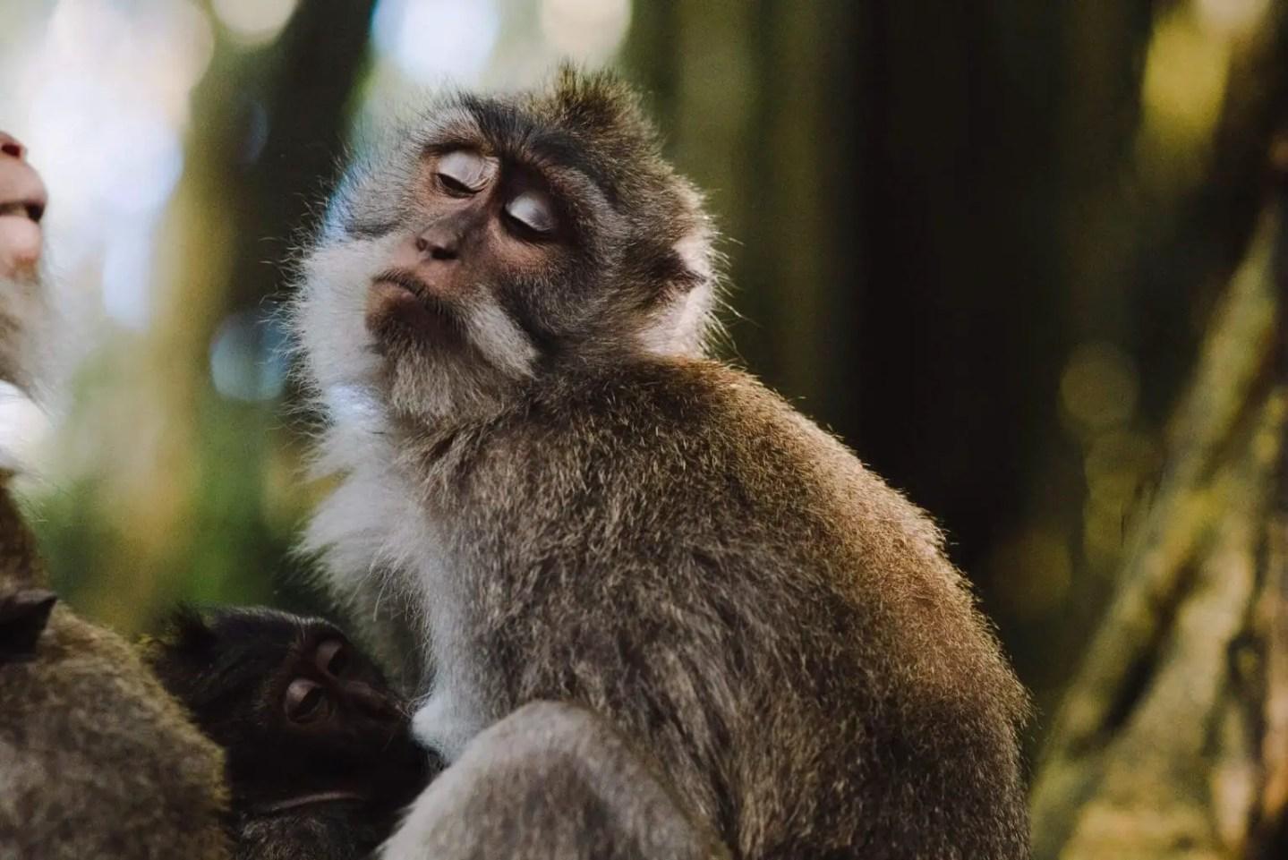 Ubud 3 day itinerary - Ubud Sacred monkey forest