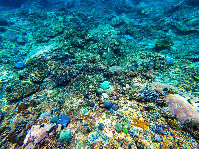 snorkeling nusa penida - coral reefs