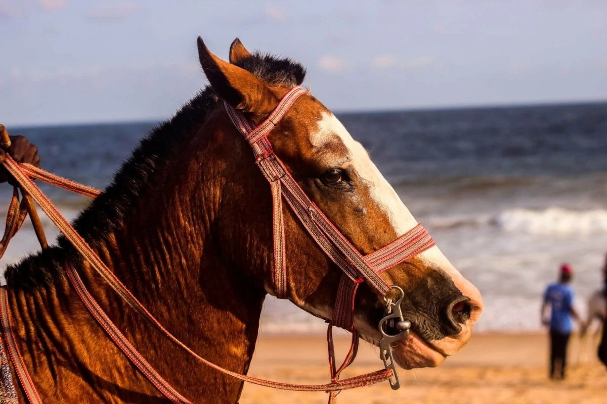Go horse riding on Amelia Beach