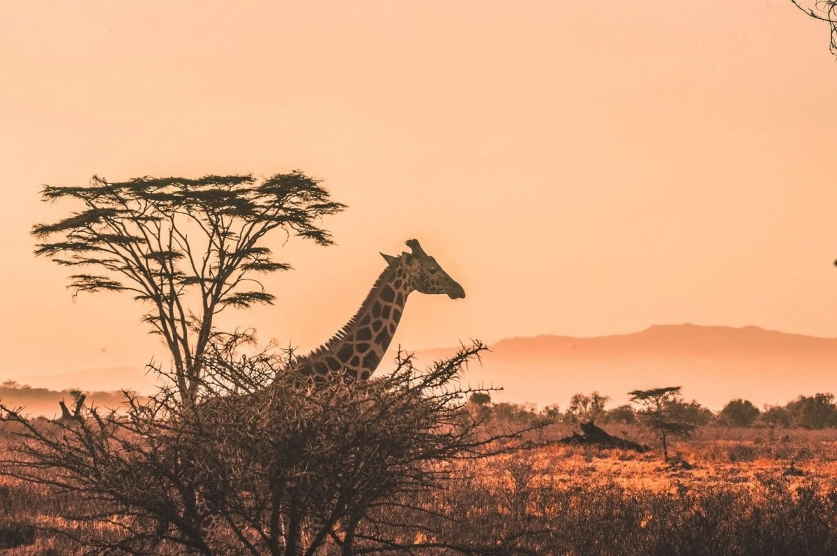 Books about wanderlust Kenya