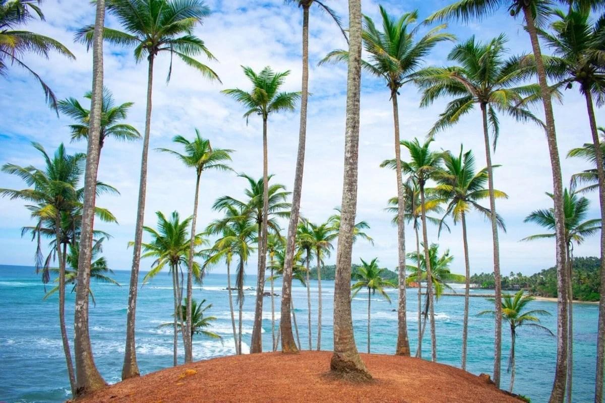 Coconut Tree Hill Mirissa Sri Lanka