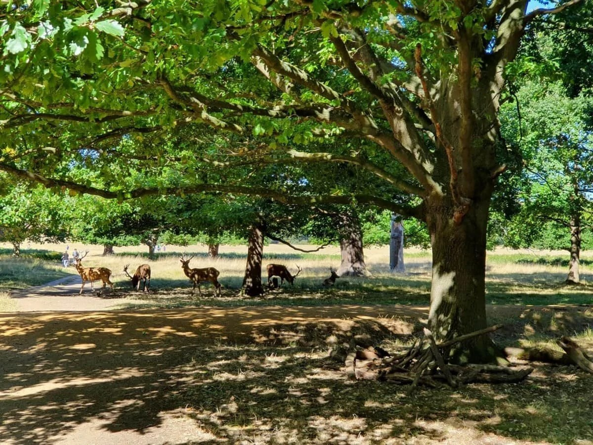 Hidden Gems in London - Deers in Richmond Park