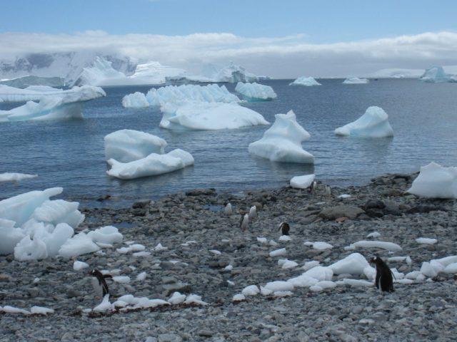 antarctica 902