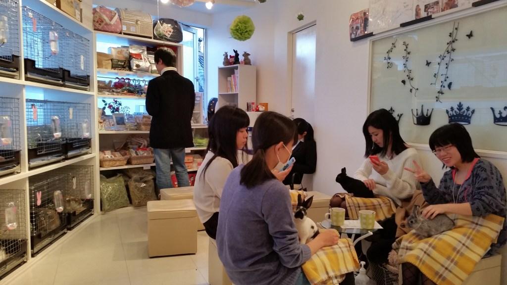 bunny hedgehog rabbit cafe japan