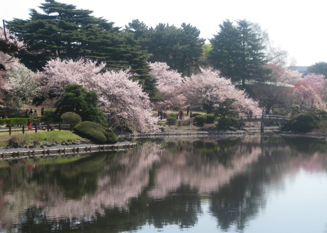 we thing spring is the best time of the year to visit Tokyo