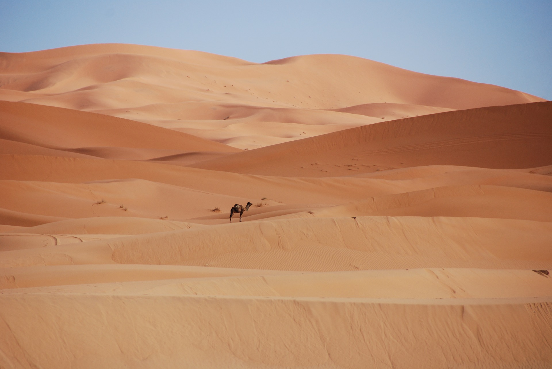Young, White and Working In Morocco
