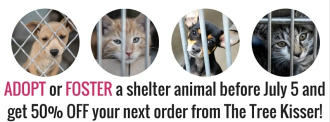 ADOPT or FOSTER a shelter animal before