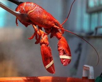 switzerland bans boiling lobsters