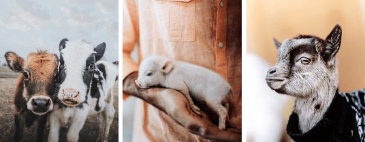 vegan instagram accounts sammantha fisher