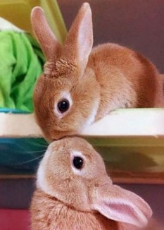 the ultimate guide to cruelty-free cleaning products ecover mrs meyers method bunnies rabbits animal testing