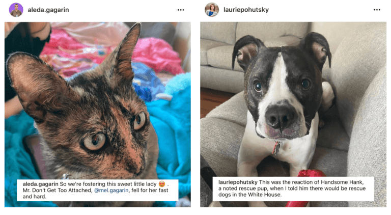 """Collage of two images side by side.  Image on the left is a screenshot of an Instagram post from NYC Council Candidate Aleda Gagarin, overlaid with a screenshot of her original caption. The photo shows a cat sitting on a blanket. Her caption text reads, """"So we're fostering this sweet little lady (emoji with heart eyes). Mr. Don't Get Too Attached, @mel.gagarin, fell for her fast and hard.""""  Image on the right is a screenshot of an Instagram post from Michigan State Rep. Laurie Pohutsky, overlaid with a screenshot of her original caption. Photo shows a large rescue dog sitting on a couch, looking into the camera. Her original caption's text reads: """"This was the reaction of Handsome Hank, a noted rescue pup, when I told him there would be rescue dogs in the White House."""""""