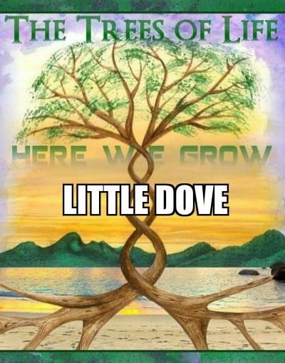 little-dove-hwg