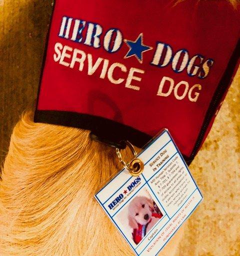Service dog vest for air travel