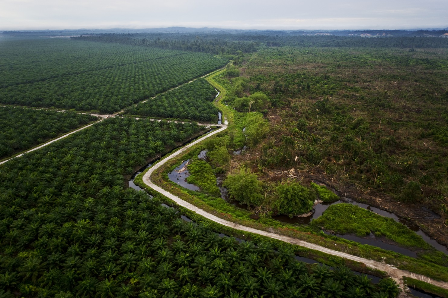 Palm Oil – Why DO We Care?