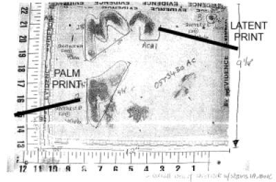 cortez-palm-print