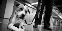 dog-in-prison