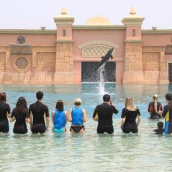 dolphin-bay-1