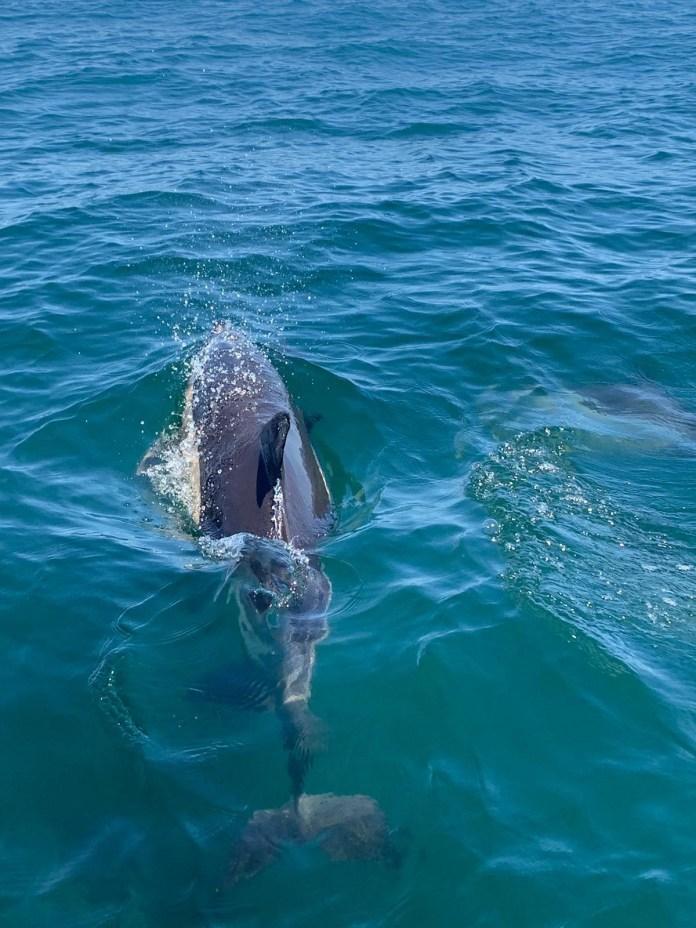 Dolphin Tor
