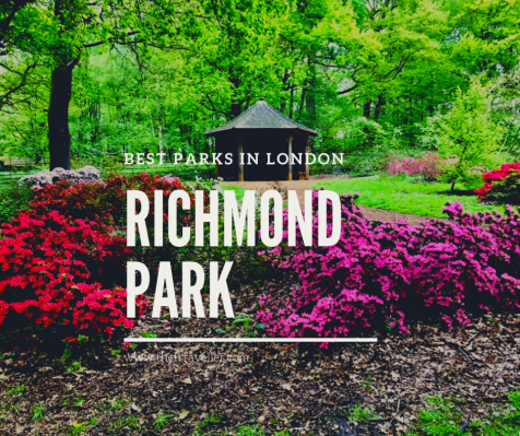 Richmond Park - the Best Parks in London