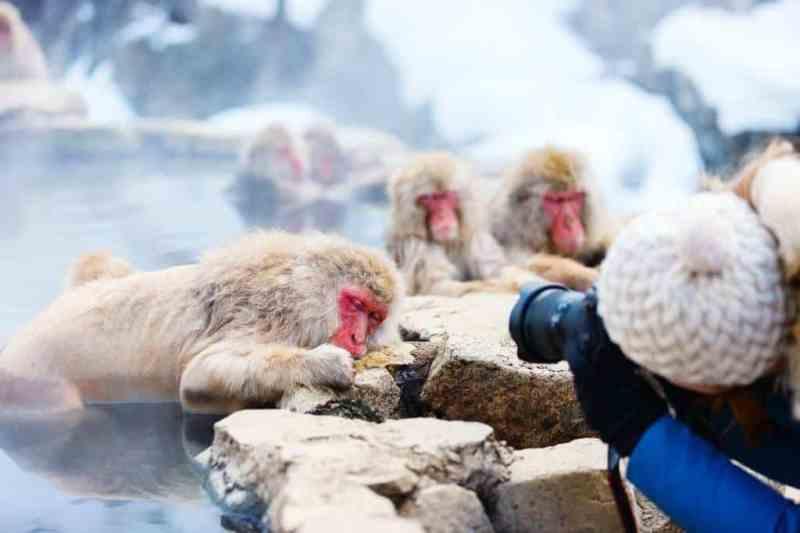 Foto de Jigokudani Monkey Onsen