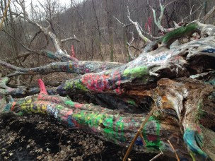 The Hippy Tree on the trails behind the Old State Hospital