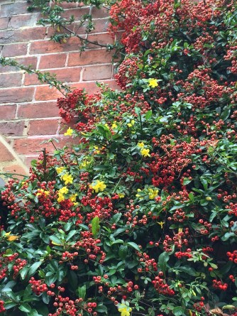 Pyracantha coccinea 'Red Column' maybe?