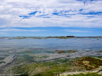 Fyfe Quay Seal Colony - Driving from Christchurch to Marlborough - The Trusted Traveller